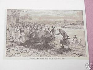 1889 Africa Illustrated Page Blessing A Dead Hippo
