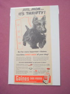 1949 Gaines Dog Food Ad Featuring A Scottish Terrier