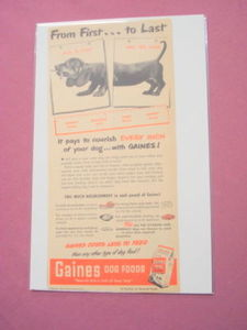 1950 Gaines Dog Food Ad Featuring A Dachshund