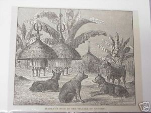 1889 Africa Illustrated Page Stanley's Dogs