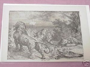 1889 Africa Illustrated Page The Lion Hunt