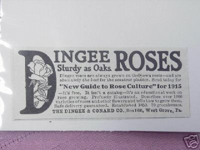 1915 Ad Dingee Roses Dingee & Conard Co, West Grove Pa