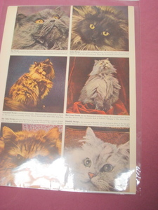1941 Persian Cat 3 Page Magazine Article