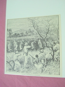 1889 Africa Illustrated Page Water Buffalo Stampede