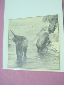 1889 Africa Illustrated Page Elephants on the Zambesi
