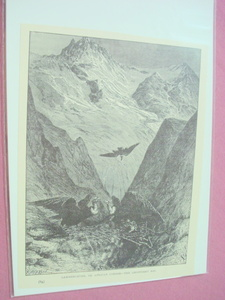 1889 Africa Illustrated Page Lammergeyer African Condor