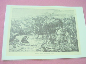 1889 Africa Illustrated Page Camels In North Africa