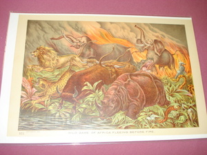 1889 Africa Illustrated Page Animals Fleeing Fire