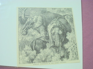 1889 Africa Illustrated Page Elephants Sofala Country