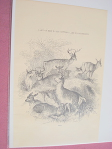 1880 Illustrated Page Deer Game of the Early Settlers