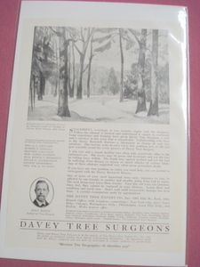 1920 Davey Tree Surgeons Ad Kent, Ohio