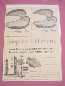 1940's/50's Ethyl Corporation Gasoline Bluebird Ad