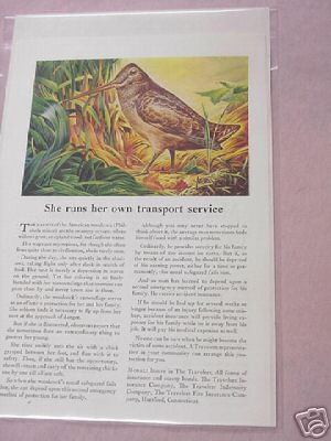 Travelers Insurance Company 1945 Ad American Woodcock