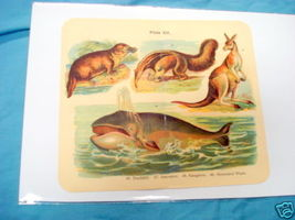 1920's Mammals Color Page Whale, Kangaroo, Ant-Eater