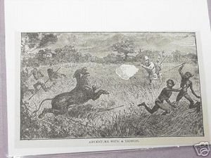 1889 Africa Illustrated Page Adventure With A Lioness