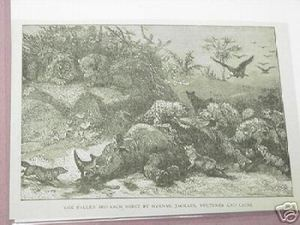 1889 Africa Illustrated Page Dead Rhino