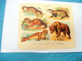 1920's Mammals Color Page Brown Bear, Otter, Seal