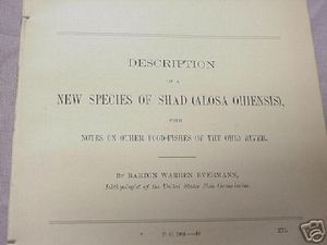 1902 14 Page Report New Species of Shad Alosa Ohiensis