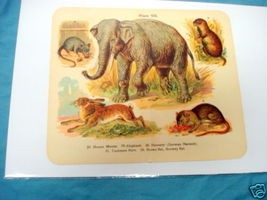 1920's Mammals Color Page Elephant, Rat, Mouse, Hare