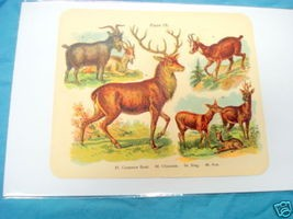1920's Mammals Color Page Stag, Chamois, Roe, Goat