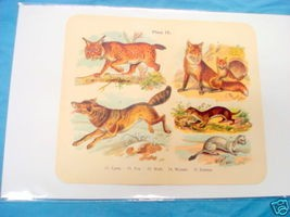 1920's Mammals Color Page Lynx, Wolf, Ermine, Fox